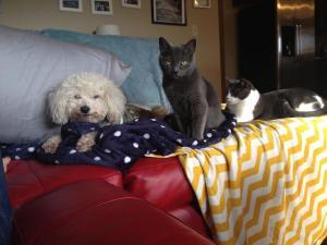 Fleuree, Bella & Charlie